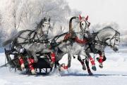 Погода в Москве: ультраполярное вторжение вызовет обвал холода