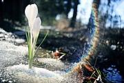 Аномально ранняя весна идет в США