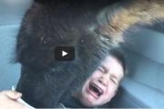 Бесцеремонная лама напугала ребенка: видео