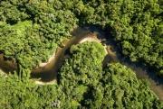 Обезьяны помогли человеку выжить в амазонских джунглях
