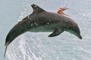 Осьминог прицепился к спине дельфина и вместе с ним выпрыгнул из воды!