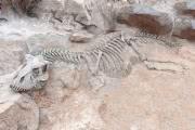 Массовое вымирание видов может начаться уже в 2100 году