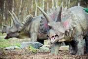Травоядные динозавры ели мясо