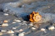 Крошечные создания на дне океанов способствуют изменению климата