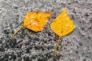 Погода в Черноземье: зима предупреждает о своем приближении