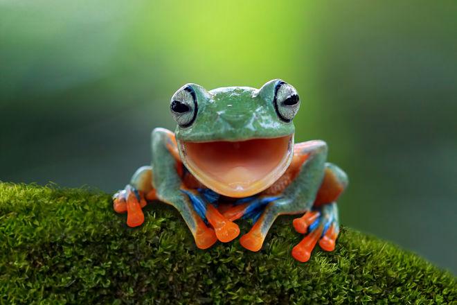 5 причин, почему биоразнообразие это важно